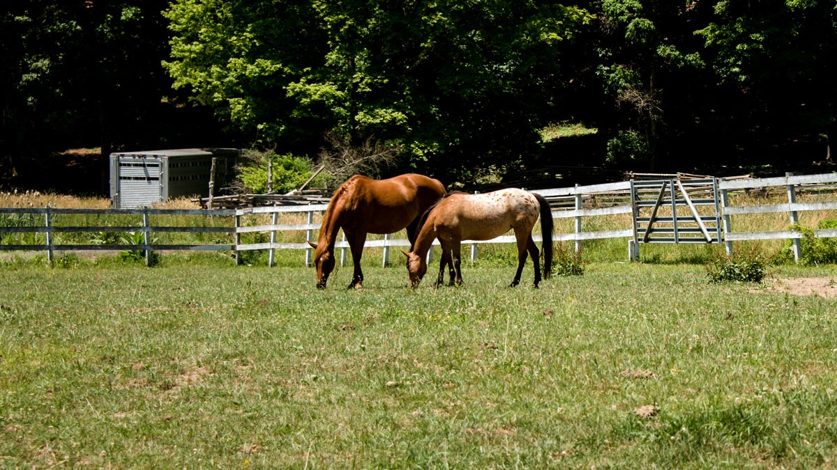 Open field with fence and horses