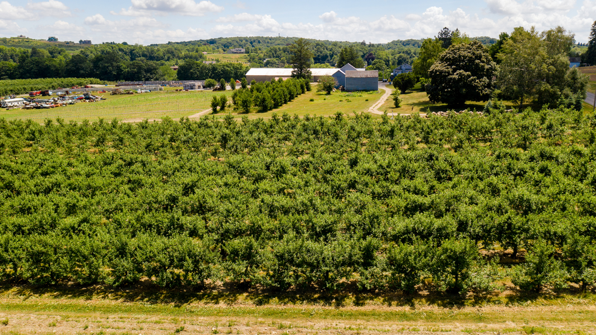 Clintondale Orchard
