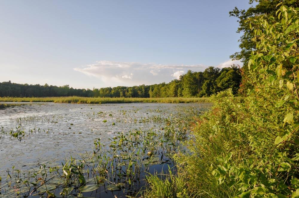 Image of Esopus creek