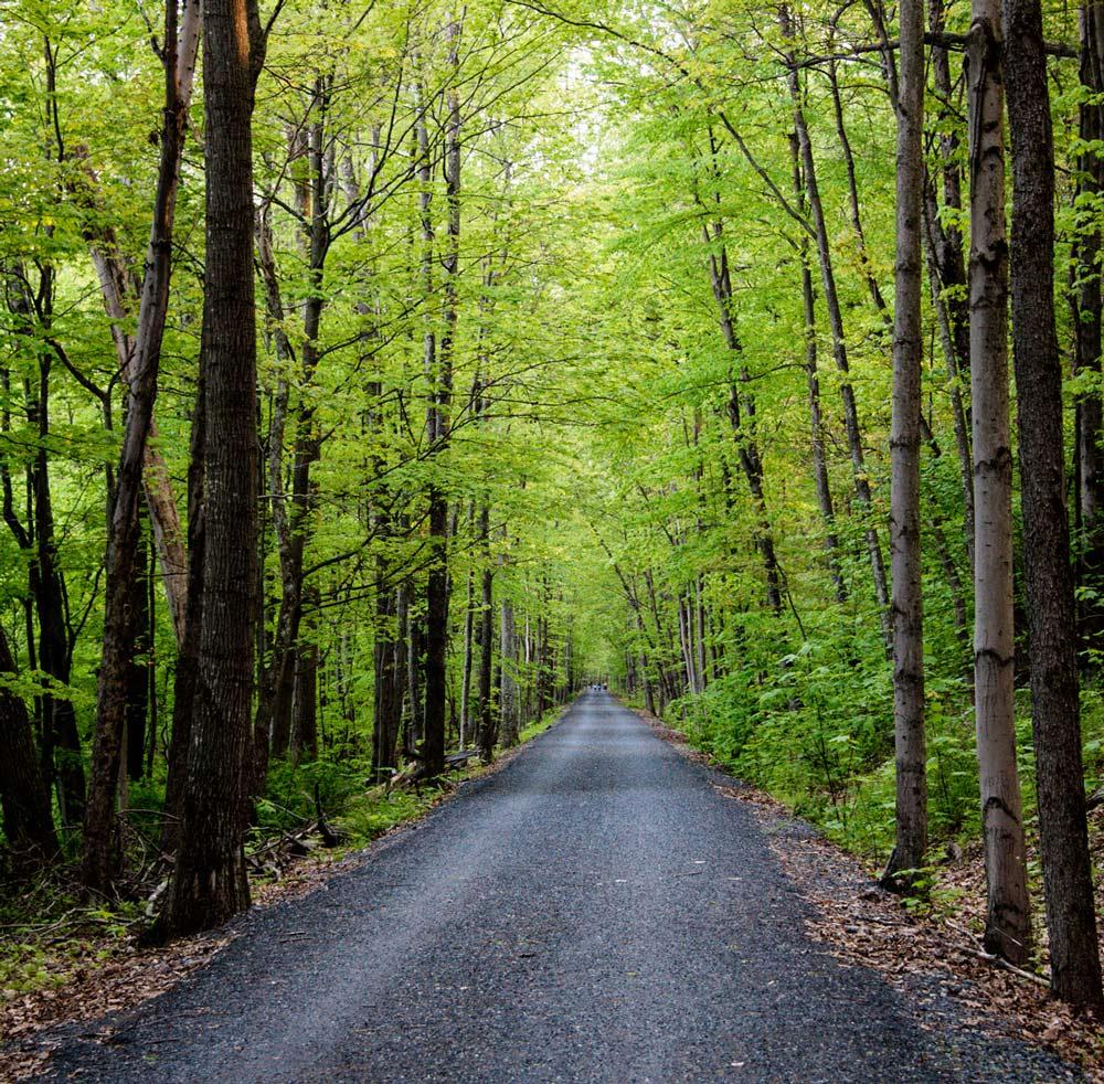 Woods pathway
