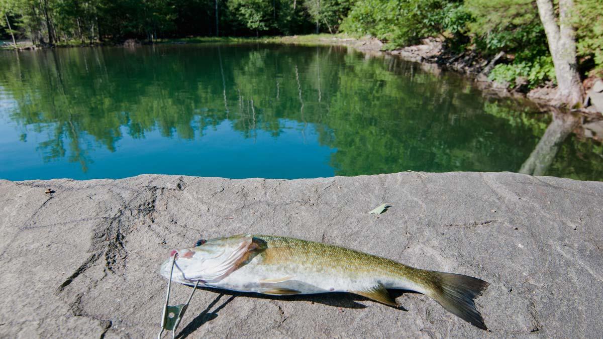 Shokan_Fishing