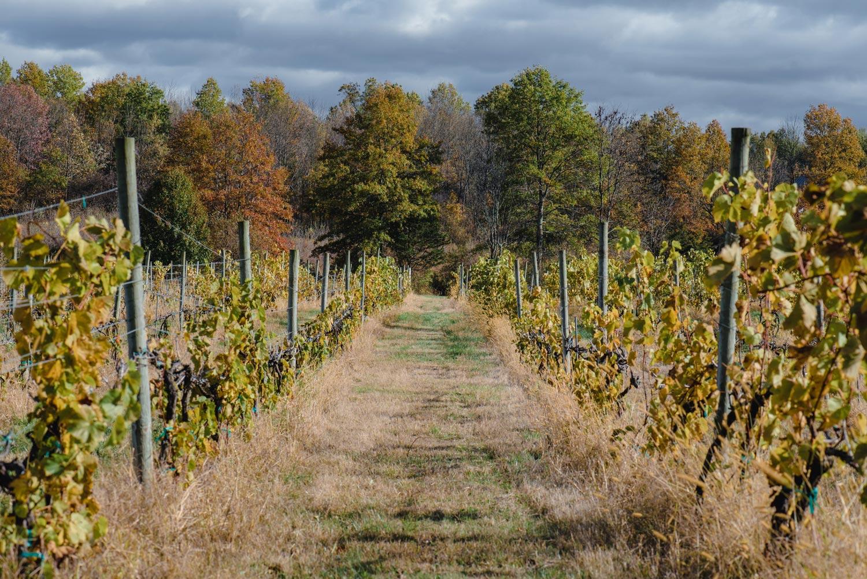 Vineyard view in Gardiner